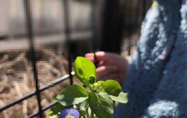 『【考えごと】春がきた!と思う花。』の画像
