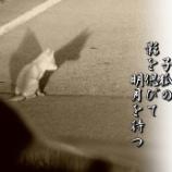 『影を偲びて』の画像
