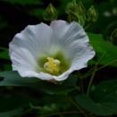 国分寺 殿ヶ谷戸庭園に秋を訪ねて:2020(令和2年9月)