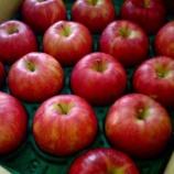 『木村秋則さんのリンゴ』の画像