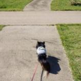 『ドラクエウォークしながら公園散歩♡』の画像