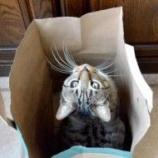 『地球ドラマチック「解明!ネコの不思議」①』の画像