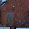 【イヌ】 雪がしんしんと降っていた。どうしたのかな? → 犬は庭先でこうなった…
