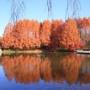 栃木県中央公園の紅葉 - 栃木県宇都宮市