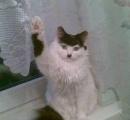 【画像】ヒトラーに似すぎのネコが発見される