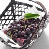 『家庭菜園のジューンベリーの収穫 & 本日のお弁当』の画像