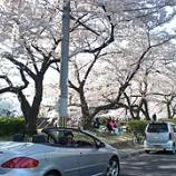 『桜のトンネル』の画像