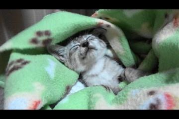 雨の夜 野良子猫