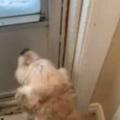 イヌが外に出たくて玄関前で待っていた。雪が積もっているけど大丈夫? ドアを開けてみる → 犬はこうなった…