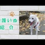 『【保護犬紹介】のんちゃん♀(雑種)甘えん坊すぎるほど人懐っこい♪ お姫様抱っこが大好き♪』の画像