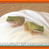 『【乃木坂工事中】向井葉月のカエルが紹介された瞬間の日村さんの優しい笑顔がこちら・・・』の画像