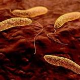 『まだ病原菌と戦うのか? コレラ菌の戦略』の画像