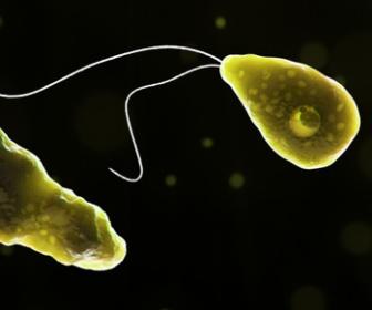 【米国】致死率97%の恐怖!「脳食いアメーバ」屋外プールで泳いだ59歳男性が死亡 水位低下で鼻から感染 鼻クリップの着用