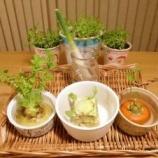 『簡単に始められてインテリアにも!キッチンでできる室内菜園の実例まとめ 1/2』の画像