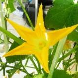 『植物との対話(1)』の画像