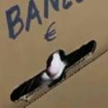 【ネコ】 ここは秘密の猫銀行。これをいつもの口座によろしく → 猫好きは貯金が捗るぞ…