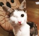 生後間もない片目の子猫を保護したら耳が4つあって大騒ぎに