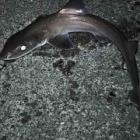 『極寒の中釣りに行きました。サメ!』の画像