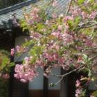 『弥生・花暦 5 花海棠』の画像
