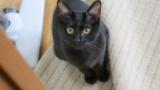飼ってる黒猫がすっっっごく可愛いから見てってくれ(※画像あり)