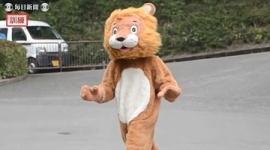 愛媛・とべ動物園、「ライオン脱走」に備え着ぐるみで訓練→ホンモノが訓練を見つめる…動画あり