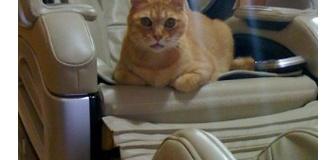 【ねこ】iphoneで撮った猫【iPhone】Ⅱ