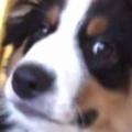 子イヌのほっぺに「キス」してみた。どうなるの? → こうなりました…