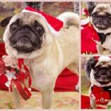 『12月の写真はクリスマス!可愛い写真撮ります!』の画像