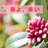 『『春よ、来い』~コード譜とメロディ譜~』の画像