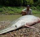 水中でも人食い生物 名古屋城外堀に肉食魚「アリゲーターガー」体長1メートルを超え、もはや捕獲不能