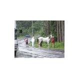『厩嶽山祭りの様子』の画像