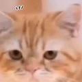 うちのネコに指を2本見せてみる。どうなるの? → 猫はこうなる…