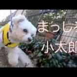 『【里子済】まっしろ小太郎』の画像
