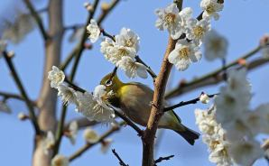 ヒロちゃんの花と鳥日記