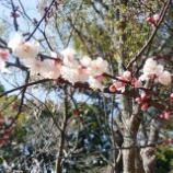 『コロナ疲れ~早春の花』の画像