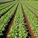 『投資家から農業ビジネスへ投資』の画像
