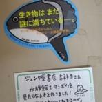 はぐれ研究者のメモ帳~UMAへの挑戦~