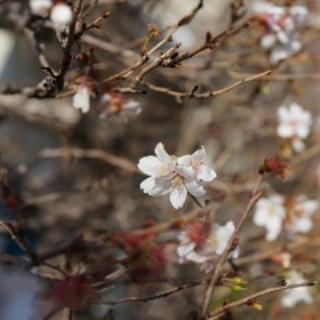 長谷川先生とちーすけのブログ
