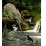 『動物の助け合い』の画像