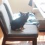 【献立】ホットプレートビビンバ。~かわいい椅子の使い方~