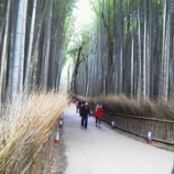 『【新婚旅行】京都嵯峨野にある「竹林の道」を散策』の画像