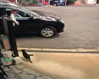 大阪で他人の飼い猫に餌を与え食べてるところをエアガンで撃つ男が現れる(動画・画像あり)
