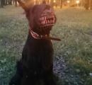 愛犬を地獄の番犬に変えるグッズが話題に