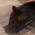 ネコが「細い箱」に入っていたので押してみた。事故る → こうなる…