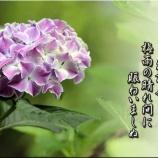 『写真で見る私の好きな舞川』の画像