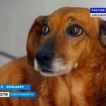 ロシアの忠犬、2年前に亡くなった飼い主の帰りを病院で待ち続ける