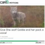 『オオカミのゴールディを助けて』の画像
