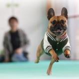『飛行犬撮影会予約状況のお知らせ!』の画像