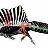 【朗報】スピノサウルスさん、水棲確定!