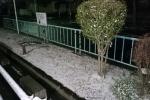 雪!路面凍結などご注意を!〜1/15(日)も雪が降ったりするみたい〜